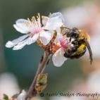 Bee-yonce